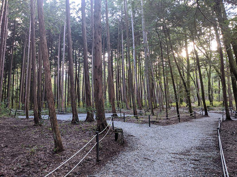 ポツンと森の中サイト