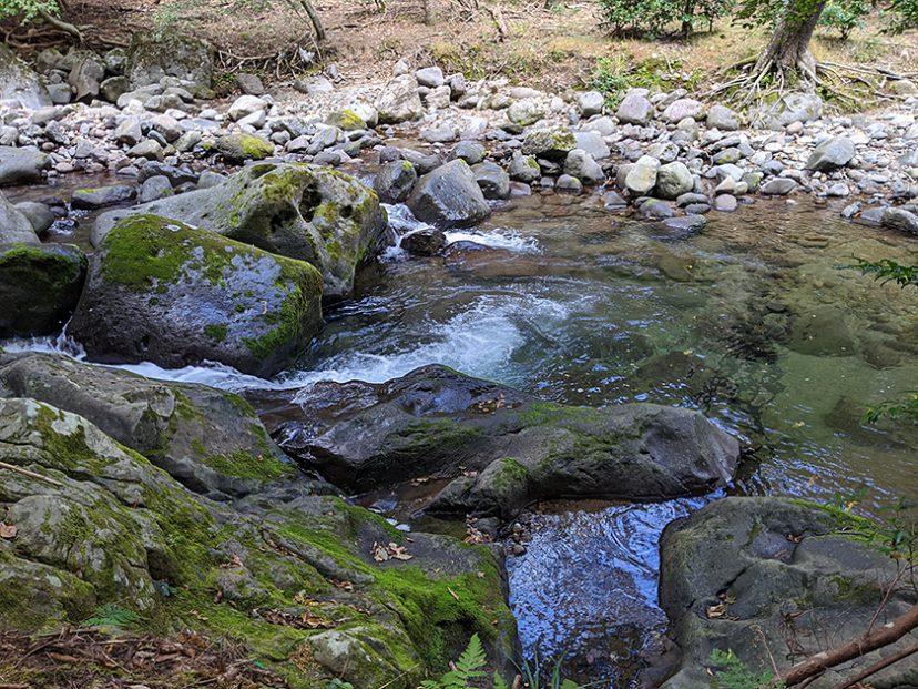 河津オートキャンプ場 清流の川